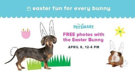 Free Pet Photo With Easter Bunny At Petsmart On April 8 Http Www Heyitsfree Net Free Pet Photo Easter Bunny Animal Free Animal Photo Easter Bunny