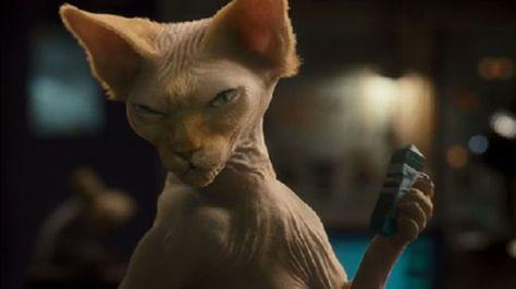 50 greatest movie cats