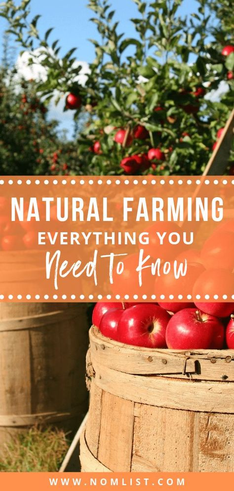 Some believe that human intervention is detrimental to farming. That's why natural farming is gainin