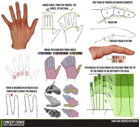 Hand and Fingers Resource Tutorial by ConceptCookie.deviantart.com on @deviantART