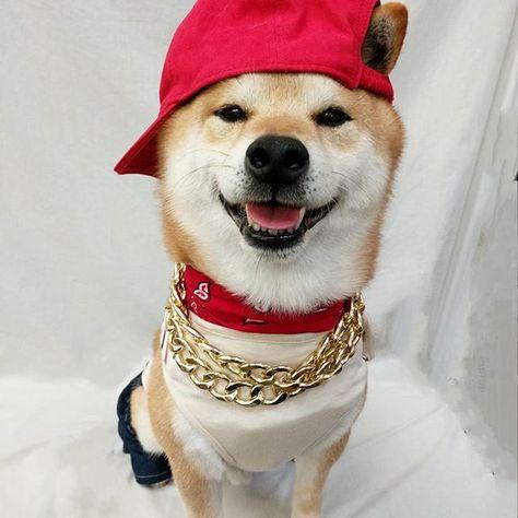 dogsofinstagram I hope all my Melbournian...