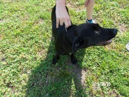 Adopt Bran On Labrador Retriever Golden Retriever Labrador Pet Adoption