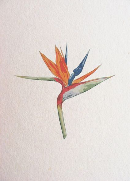62 Ideas For Tattoo Flower Bird Watercolor Painting Watercolor Flowers Paintings Bird Watercolor Paintings Birds Of Paradise Flower