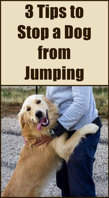 Dog Training Attack On Command Don Sullivan Dog Training Reviews Books On Dog Training With Electronic Collars Dog Training Tips Online Free Brightsid