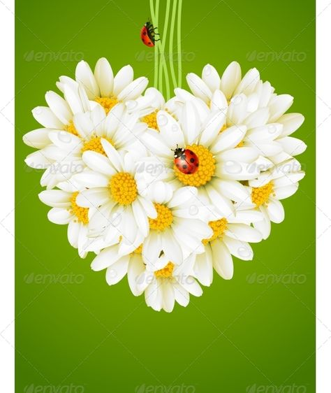 Floral love card (camomile heart) - Flowers & Plants Nature