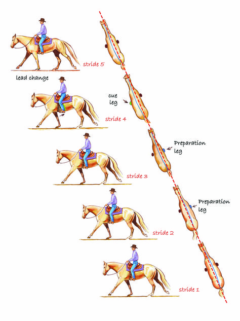 Training for Lead Changes  A lead change is one of the most complicated maneuvers we do with a horse, says AQHA Professional Horseman Michael Colvin. If you go to the world of dressage, for example, lead changes are done only in the upper levels of training. For some horses, it's naturally easier for them to do – they're a little more athletic.  Learn the steps for asking your horse for a lead change: http://americashorsedaily.com/wp-content/uploads/BAT-Colvin-changing-leads.jpg