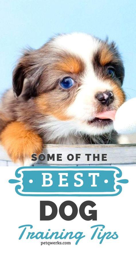 Some Of The Best Dog Training Tips Best Dog Training Dog