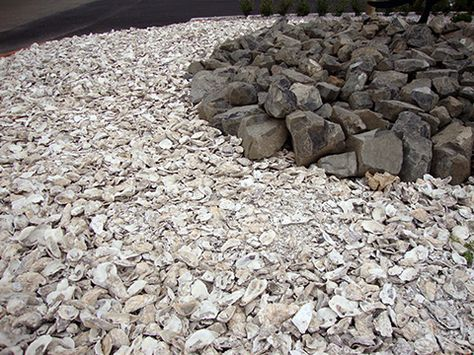 Bulk Crushed Oyster Shell And Oyster Shell Flour Shells Oyster