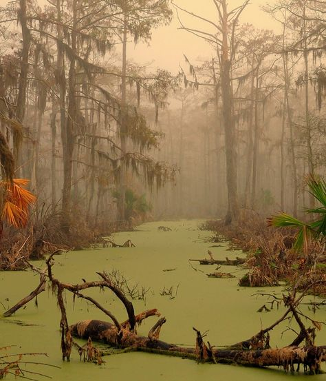 "Manchac Swamp, Louisiana Located in the U.S. state of Louisiana, near the city of New Orleans, is also known as ""swamp of the ghosts"". In the belief that this move surrounding swamp was cursed by a sinister adept senior voodoo cult, in the early 20s..."