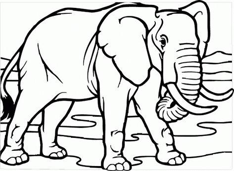 Mewarnai Gambar Gajah Tampak Nyata Contoh Anak Paud Gajah