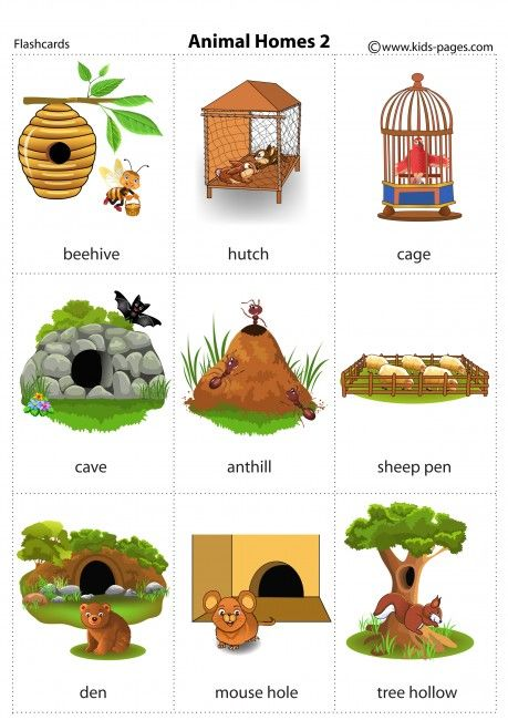 Animal Homes 2 flashcard Animals, their homes, Animal