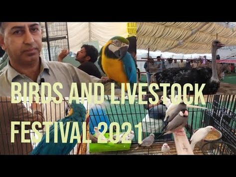 Birds and Livestock Festival 2021 at By Pass Hyderabad Pt.1.