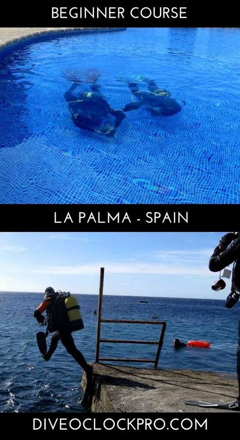 390 Dive O Clock Ideas In 2021 Diving Scuba Diving Scuba