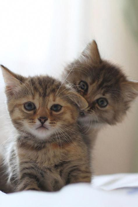 You Can Throw Away That Tuna Now Kittens Cutest Cute Animals Cats