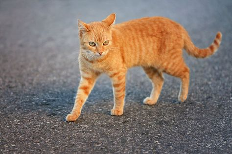 Cat photography-Zoran Milutinovic