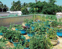 Perfect 5 Pics Rooftop Vegetable Garden In Kerala And View In 2020 Vegetable Garden Garden Rooftop