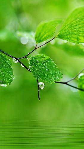Macro Green Over Water