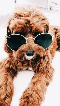 Pin By Julia On Doggos 2020 Cute Baby Animals Cute Animals Cute Puppies