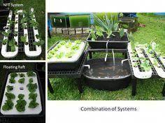 Lebendiges Speichen Aquaponik Design Jetzt Konnen Sie Bepflanzung Hochbeet Aquaponik Bepflanzung Design In 2020 Hochbeet Bepflanzen Hochbeet Pflanzen Hochbeet