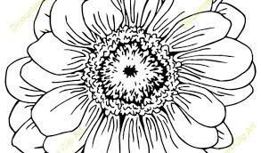 Image Result For Zinnia Flowers Drawing Zinnia Flowers Zinnias