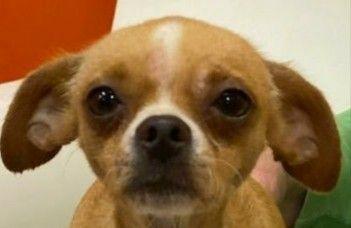 Dogs For Adoption Petfinder Dog Adoption Dogs Animals