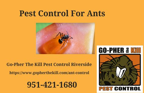 Pest Exterminator For Ants Eastvale Ca Ant Species Ants Ant