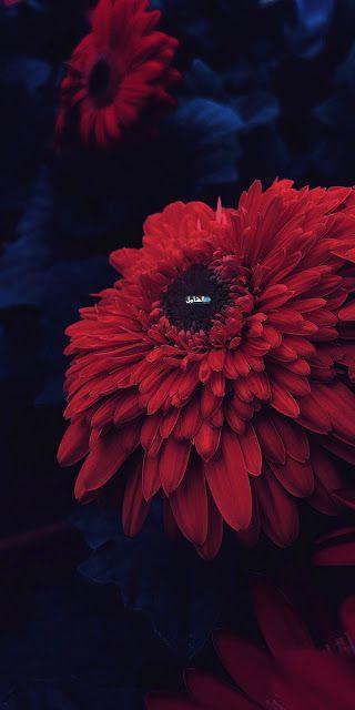 صور خلفيات 2021 اجمل صورخلفيات Hd الموبايل Flower Phone Wallpaper Wallpaper Apple Wallpaper Iphone