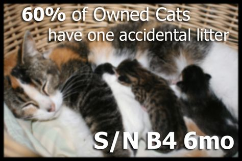 60 Of Owned Cats Have One Accident Litter Of Kittens According