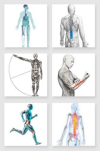 Irregular Graphic Human Body Png Images Psd Free Download Pikbest Medical Pictures Graphic Human Body