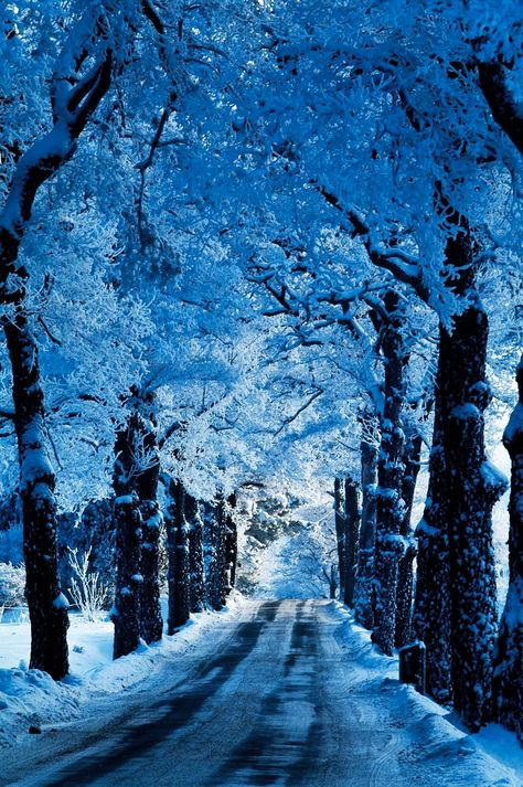 Blue color palette, winter palettes, snow landscape, shades of blue Beautiful Places To Visit, Beautiful World, Amazing Places, Winter Szenen, Winter Blue, Winter Road, Winter Light, Everything Is Blue, Snow Scenes