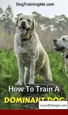 Best Way To Train Your Dog To Pee Outside And Pics Of How To Train