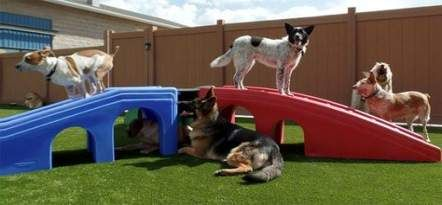 21 Ideas Yard Play Grass For 2019 Yard Pet Boarding K9 Grass Dog Friends