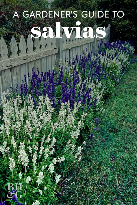 Salvias, also called sages, are easy to grow, bloom abundantly, and great looking in the landscape. Use this guide to find the best types of salvia for your garden. #gardening #gardenideas #gardentips #gardeningguide #gardenlandscaping #bhg
