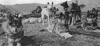 Image Result For Siberian Husky Balto And White Wolf