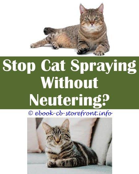Thunder Conserve Pheromone Home cat Spray