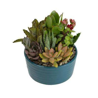 5 5 In Atlantic Blue Ribbed Glazed Succulent Garden Plant In 2020 Succulents Garden Succulents Dish Garden