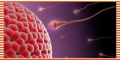 Pekembangan Janin Dalam Kandungan Usia Kehamilan 1 Bulan Minggu Ke 1 Dan Minggu Ke 2 Https Babyologist Com Blog Kehamilan N3606 Ciri