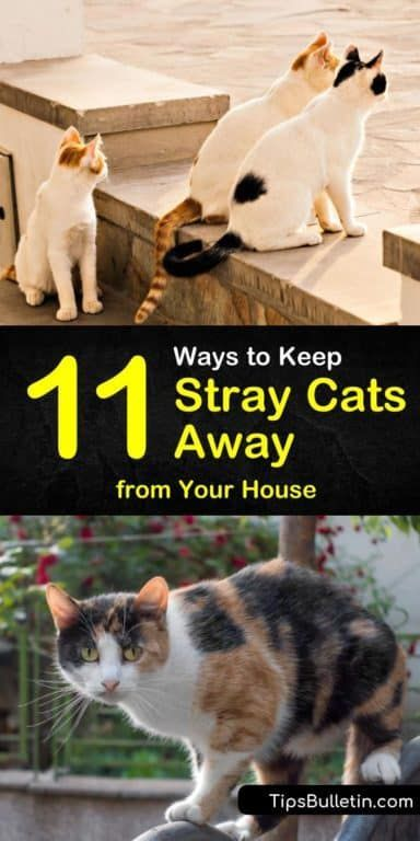 11 Easy Ways To Keep Stray Cats Away From Your House Stray Cat Keep Cats Away Cat Repellant