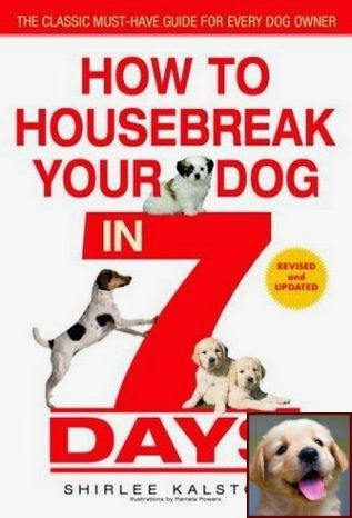 House Training A Puppy Fast And Clicker Dog Training System Dog