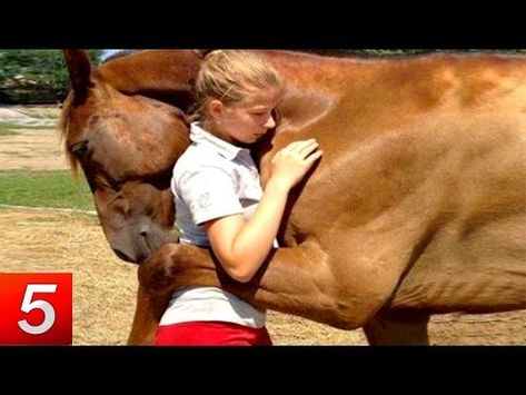 10 Unbelievable Animals That Saved Other Animals Youtube