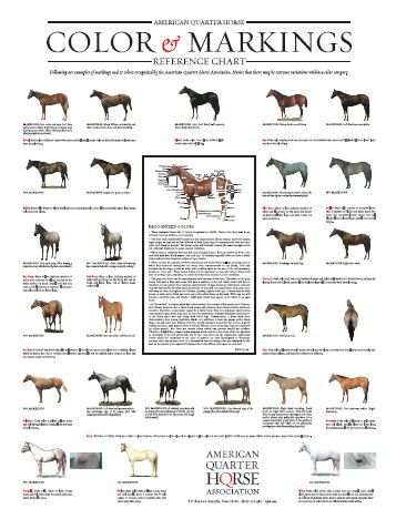 Horse Breeds and Coloring