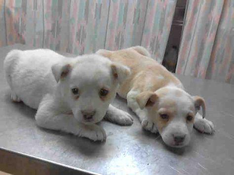 Snow Houston Texas Petharbor Com Animal Shelter Adopt A Pet