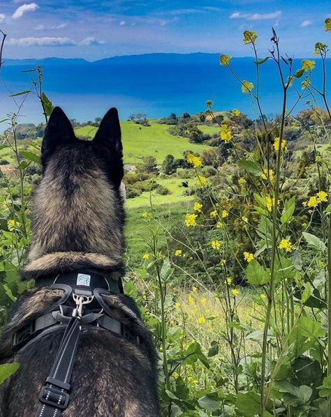 Hurry up! Adventure is waiting! PC: @sandi_n_aspen Aspen is in our Black Adventure Harness #embarkpets #instadog #instagramdogs #traildog #adventuredog #dogswhohike #hikingdogsofinstagram #hikingwithdogs #campingwithdogs #campingdog #hikingdog #traveldog #wilddog #ilovemydog #dogsonadventures #dogsofinstagram #wolfdog #runningdog #adventuredogs