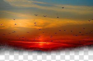 Silhouette Of Birds Flying During Golden Time Sunset Sky Cloud Sunset Under The Birds Transparent Background Png Clipart Sunset Sky Color Splash Art Clouds