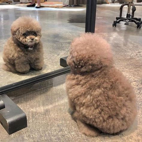 Fluffy Puppies, Baby Puppies, Baby Dogs, Cute Puppies, Doggies, Cute Baby Animals, Animals And Pets, Overweight Dog, Dog Rates