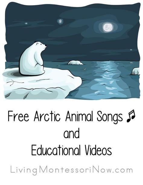 Free Arctic Animal Songs and Educational Videos - Polar Animals Preschool - Tierwelt Preschool Songs, Preschool Science, Preschool Winter, Science Ideas, Animal Science, Animal Activities, Holiday Activities, Arctic Habitat, Animal Poems