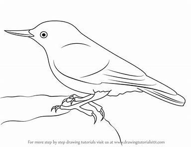 Chickadee Bird Coloring Pages Bing With Images Bird Coloring