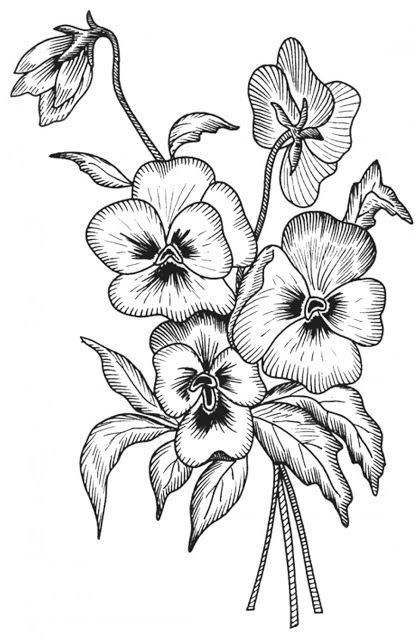 7 Free Downloads Anti Stress Coloring Pages Pansies Color Hint