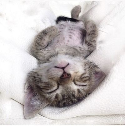 Photography Tumblr Sleeping Kitten Cute Cat Wallpaper Cute Cats