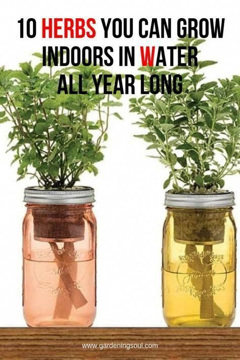 10 Herbs You Can Grow Indoors In Water All Year Long Planting Herbs Indoor Herb Garden Plants